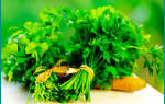Как заваривать семена петрушки при цистите