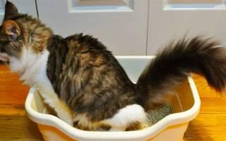 Чем лечит цистит у стерилизованных кошек