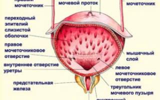 Антибиотики при цистите у кормящих женщин список