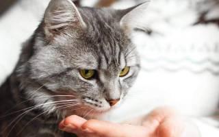 Что за болезнь цистит у кошек