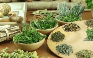 Какими травами можно лечить цистит в домашних условиях
