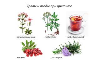 Что пить лучше при цистите какую траву