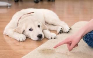 Дозировка монурала при цистите для собак
