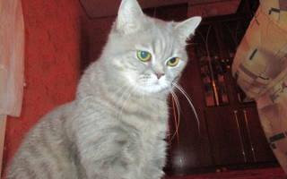 Дицинон кошке при крови в моче и цистите