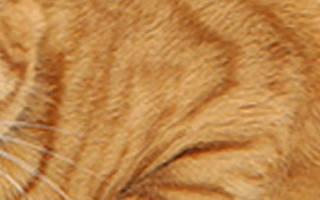 Как помочь кошке при цистите дома