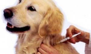 Фурагин при цистите у собак дозировка