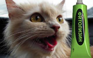 Фитолизин коту от цистита как принимать