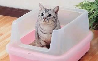Как помочь пописать коту при цистите