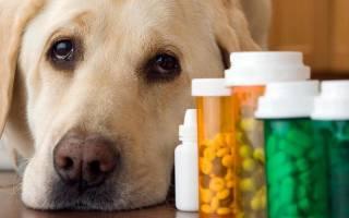 Как лечить хронический цистит у собаки в домашних условиях