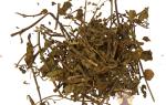 Чай ортосифона тычиночного при цистите
