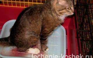 Чем лечит цистит у кошек в домашних условиях
