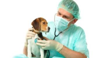 Чем лечить хронический цистит у собак в домашних условиях