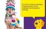 Как лечить цистит у беременной собаки