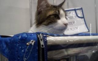 Дозировка антибиотика для кота при цистите
